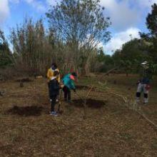 Plantados en Valleseco 150 árboles por colectivos sociales