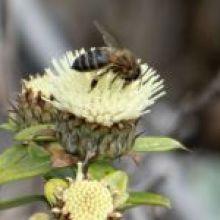 Ya quedan menos de 500 días para detener la pérdida de la biodiversidad
