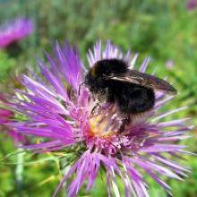 Advierten de las graves consecuencias ambientales sociales y económicas de la reducción de los insectos polinizadores
