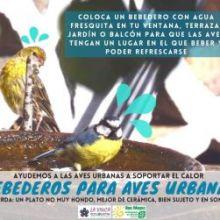 BEBEDEROS PARA AVES URBANAS: UNA MANERA SENCILLA DE PROTEGER LAS AVES Y EL MEDIO AMBIENTE