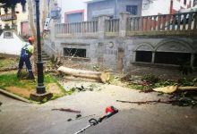 LA VINCA Ecologistas en Acción denuncia al ayuntamiento de Firgas por la tala varios árboles en la Plaza de San Roque