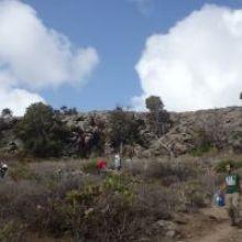 El domingo 15 de julio se llevó a cabo el riego de las repoblaciones en la zona de Tiro Pichón – Recta de Los Palmitos (Arucas)