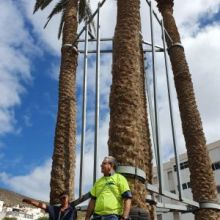 Ecologistas se encadenan a palmeras canarias de doscientos años para evitar su traslado, en Las Palmas de Gran Canaria