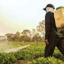 El Estado español apuesta por los tóxicos agrícolas